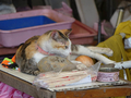 Cats of Houtong, #A079