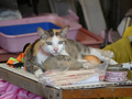 Cats of Houtong, #A080
