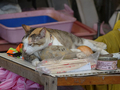 Cats of Houtong, #A081
