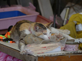 Cats of Houtong, #A083