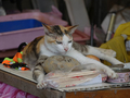 Cats of Houtong, #A085
