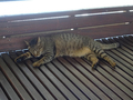 Cats of Houtong, #A095