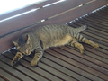 Cats of Houtong, #A096