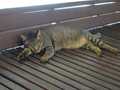 Cats of Houtong, #A097