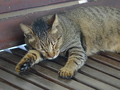 Cats of Houtong, #A098