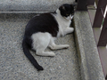 Cats of Houtong, #A099
