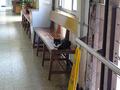 Cats of Houtong, #A102