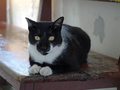 Cats of Houtong, #A103