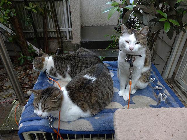 Yuki, Koyuki & Hoshi, #0136