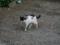 Local Cat, #1577