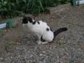 Local Cat, #1578
