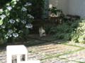 Local Cat, #1596