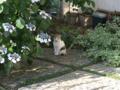 Local Cat, #1597
