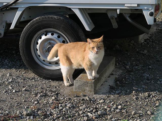 Local Cat, #1599