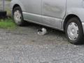 Local Cat, #1602