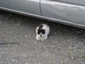 Local Cat, #1604