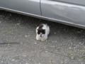 Local Cat, #1605