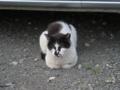 Local Cat, #1606