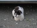 Local Cat, #1607