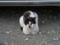 Local Cat, #1608