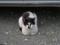 Local Cat, #1609