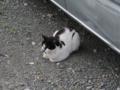 Local Cat, #1610