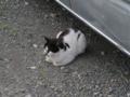 Local Cat, #1611