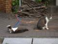 Yuki & Hoshi, #0315
