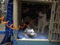Yuki & Hoshi, #0342