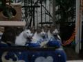 Yuki, Koyuki & Hoshi, #0352