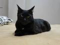 Cats of Neco Republic, #0470