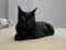 Cats of Neco Republic, #0471