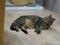 Cats of Neco Republic, #0472