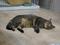 Cats of Neco Republic, #0473