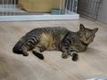 Cats of Neco Republic, #0474