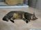Cats of Neco Republic, #0475