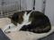 Cats of Neco Republic, #0477