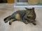 Cats of Neco Republic, #0478