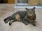Cats of Neco Republic, #0479
