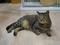 Cats of Neco Republic, #0480