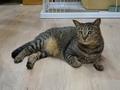 Cats of Neco Republic, #0481