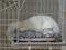 Cats of Neco Republic, #0484