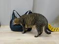 Cats of Neco Republic, #0485