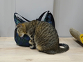 Cats of Neco Republic, #0487