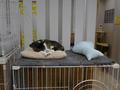 Cats of Neco Republic, #0491