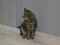 Cats of Neco Republic, #0492