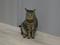 Cats of Neco Republic, #0493