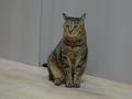Cats of Neco Republic, #0495