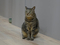 Cats of Neco Republic, #0496