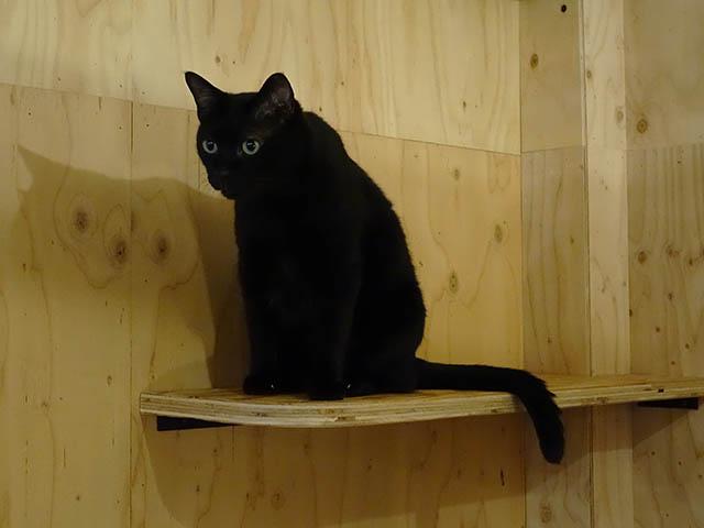 Cats of Neco Republic, #0498
